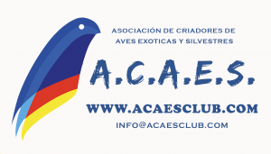 Acaes Logo
