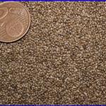 La semilla finopandy Acaesclub