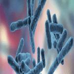 Los Probióticos y Prebióticos Acaes club